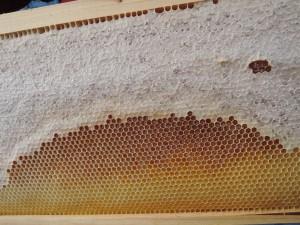 蜜いっぱい11.27