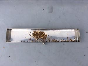 花粉採取8回目②