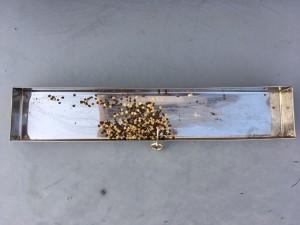 花粉採取9回目2
